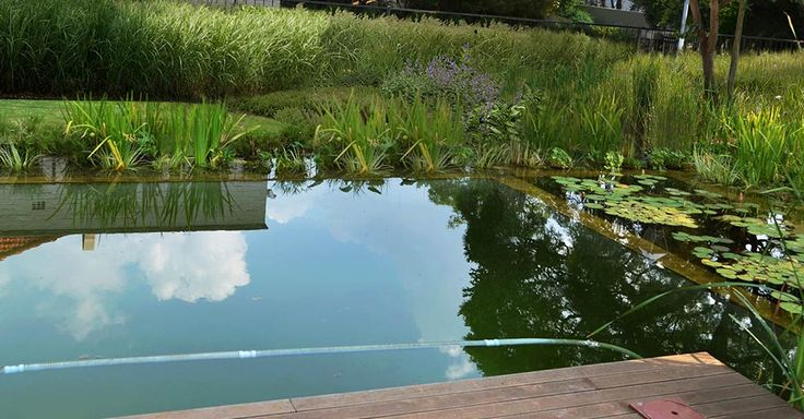 Fynbos Landscapes | Natural Swimming Pools