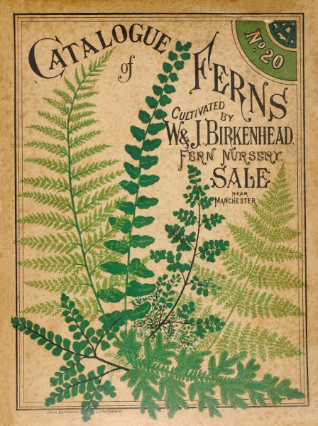 Antique Botanical Print Catalogue of Ferns by missquitecontrary, $22.00 Cute print to be framed.