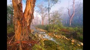 Bosque Místico, de Mark Gray