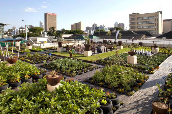 An urban gardening project greens Johannesburg rooftops. August 2012. In South Africa, the Tlhago Primary Agricultural Cooperative teaches urban youths gardening skills, educates them about climate change, and empowers them to take practical actions.
