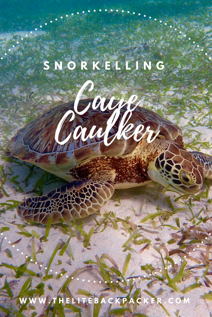 Put Snorkelling, Caye Caulker, on your Bucketlist via @https://au.pinterest.com/litebackpacker/