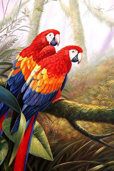En este blog solo encontraras guacamayas pintadas al oleo por los mejores pintores del mundo. Las guacamayas son las aves mas bellas del mu...