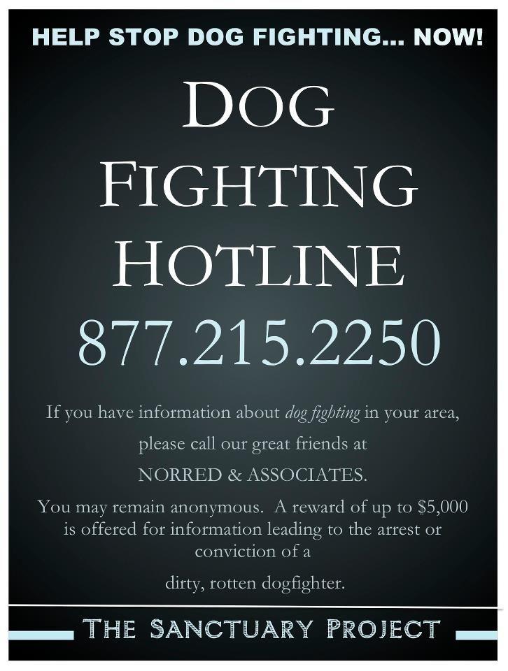 Help Stop Dog Fighting... NOW!!!  DOG FIGHTING HOTLINE
