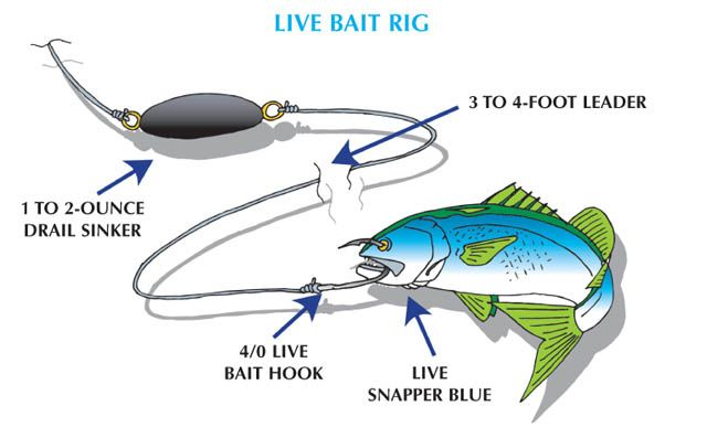 how to make live bait tubes