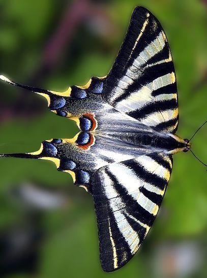 Schmetterlingsarten