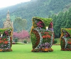 How cool is that?Sculpture, Flower Owls, Taiwan, Plants, Front Yards, Gardens Art, Yards Art, Topiaries, Backyards