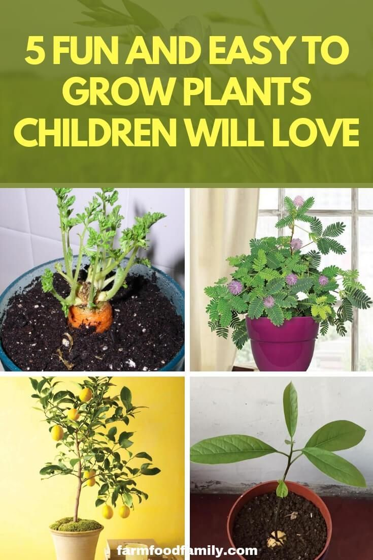 For A Fun And Educational Activity Try These Five Easy Houseplants Kids To Plant Grow Gardeningtips Gardeninghacks Farmfoodfamily