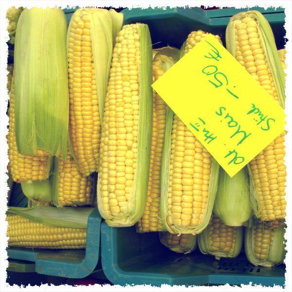 Maiskolben/ Mazorca de maíz/ Corncob