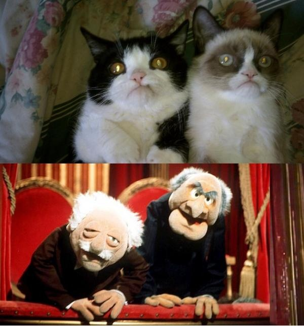 1000 Ideas About Statler And Waldorf On Pinterest: 71 Best Grumpy Cat Images On Pinterest