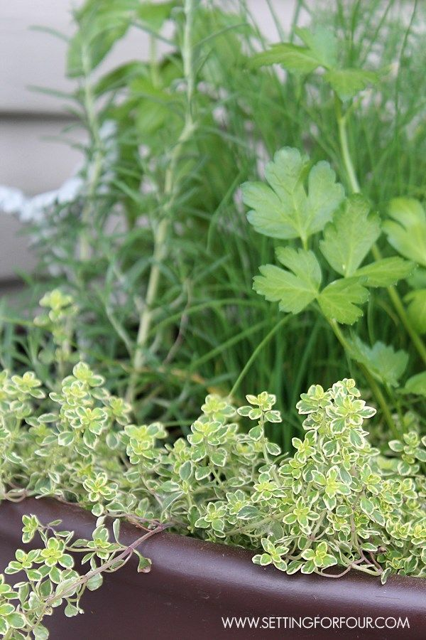 top 25 best potted herb gardens ideas on pinterest strawberry pots herb pots and patio herb gardens