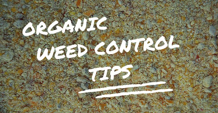 Organic Weed Control Tips