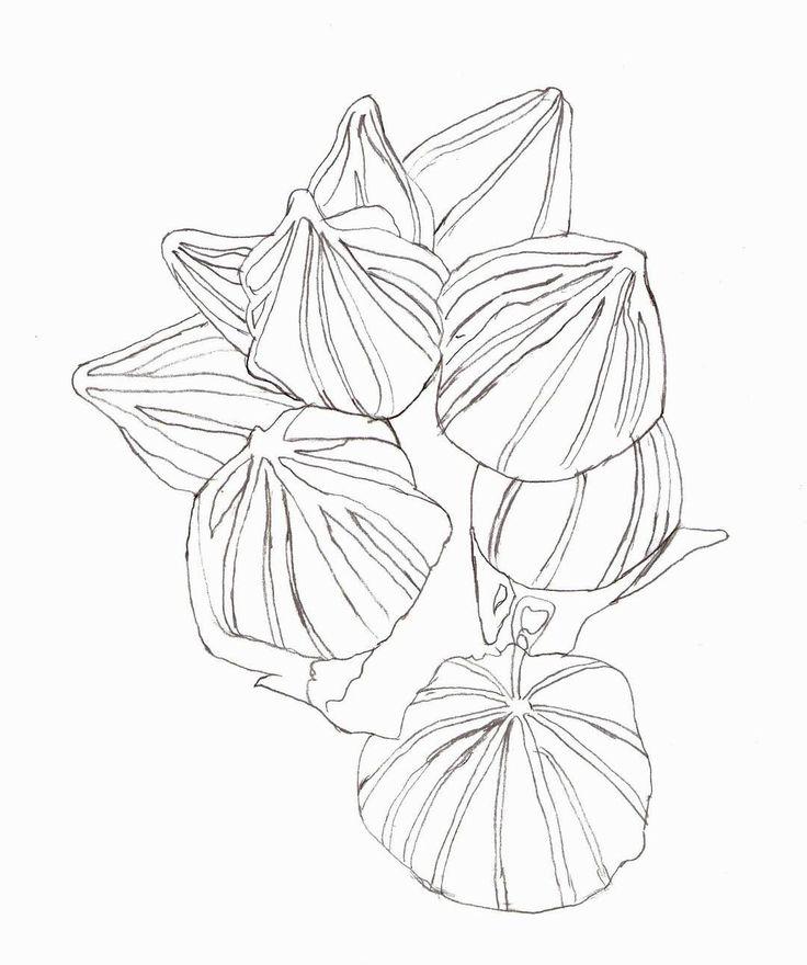 #wildblumen #wildflowers #zeichnung #zeichnen #stockrose #fruchtkörper #drawing #marianne6 #redbubble #träumewerdenwahr