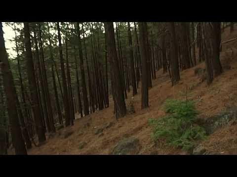 Breakdown - Bigfoot Sounds 2012 - YouTube