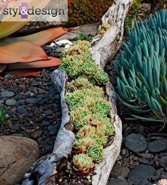 Rośliny w wydrążonym pniu