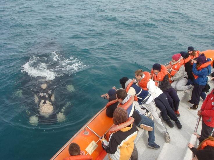 Puerto Madryn, avistaje de ballenas francas del sur, Argentina.