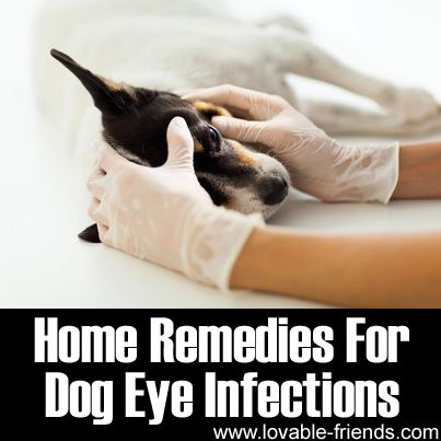Holistic Treatment For Cat Eye Infection