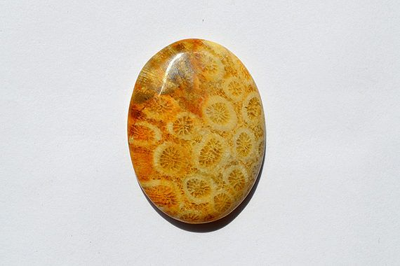 40.5 Cts Natural Fossil Coral Gemstone Cabochon Awesome Designer Oval Fossil coral Loose Cabochon 34x26x6 MM R06684 by JAIPURARTMART on Etsy