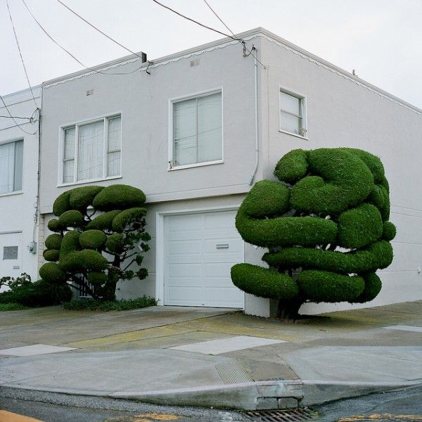 the art of cutting trees !