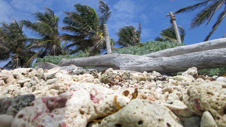 Rocas de mar, fragmento de la naturaleza, contemplando formas [San Andres - Isla, Colombia] Capturado por William Dueñas (2016). 📷-Rocks of sea, fragment of the nature, contemplating forms [San Andres - Island, Colombia] Captured by William Dueñas (2016).