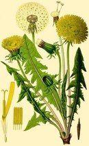 Ботанические иллюстрации | 107 фотографий | ВКонтакте