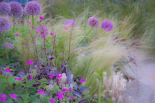 ETHEREAL GARDEN by Jane Legate, via Flickr.ground geranium ,purple heuchera, mexican grass& purple globe alliums.