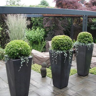 Rounded boxwoods in tall containers make for modern, urban planters. Love the hanging ivy.