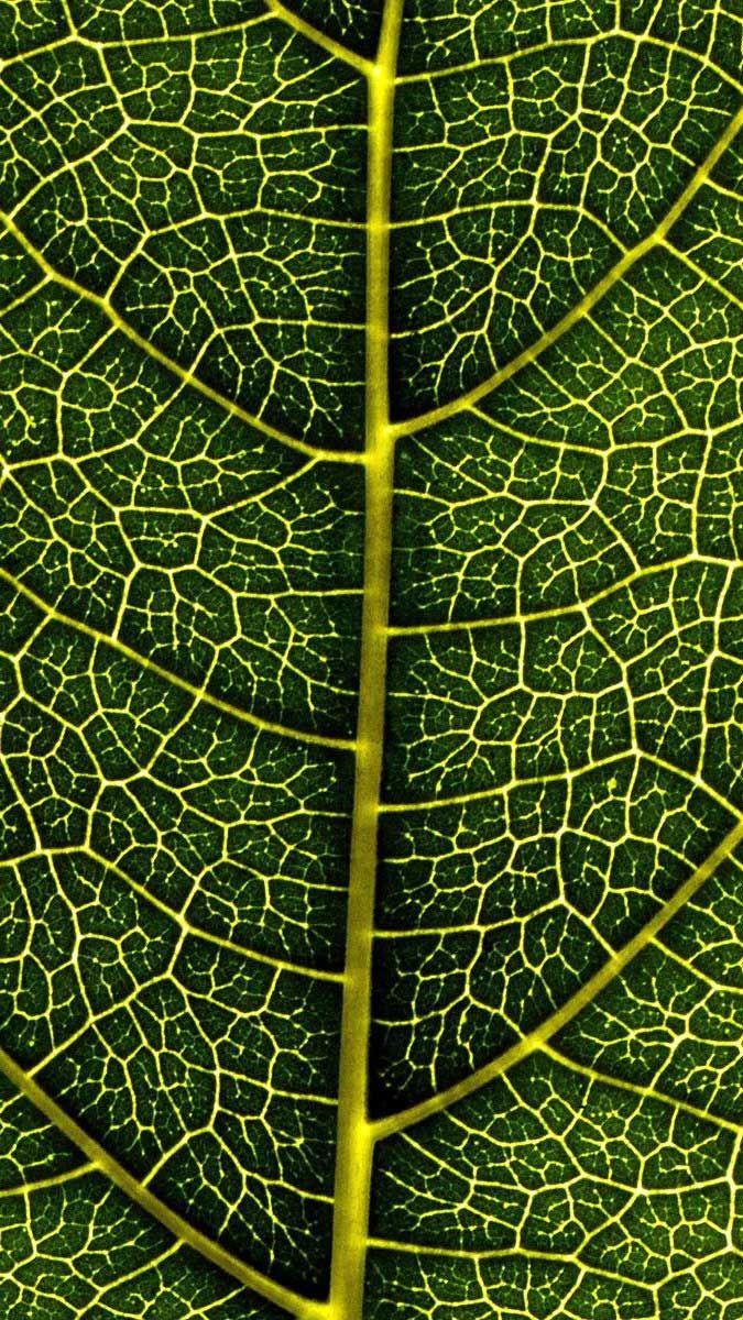 Iphone Wallpaper Leaf veins macro Hd in 2020 Iphone