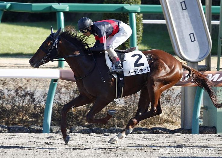 イーデンホール みんなの投稿写真|競走馬データ - netkeiba.com