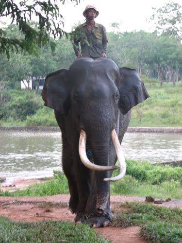Sekolah Gajah, Way Kampas, Lampung