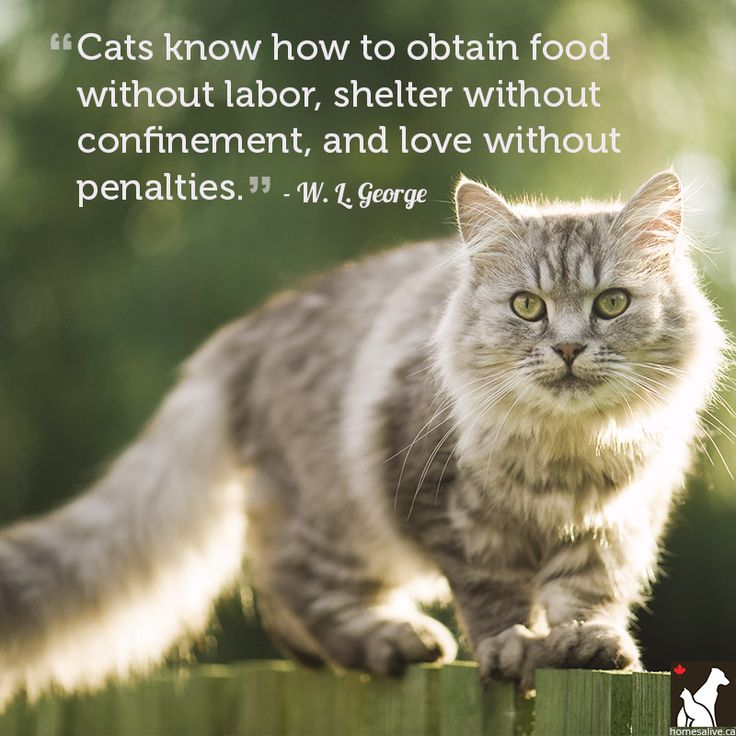Love Animal Quotes: Cats, Dogs & Pets!: A Collection Of Ideas To Try About