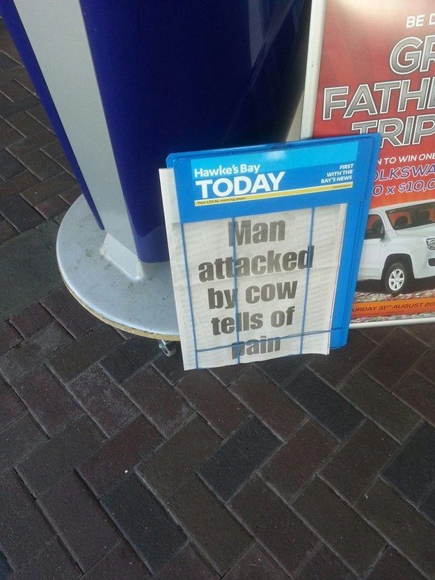 AND YOU DON'T EVEN UNDERSTAND THE ISSUES WE FACE EVERY DAY. | 29 Pictures That Prove New Zealand Is The Greatest Country On Earth