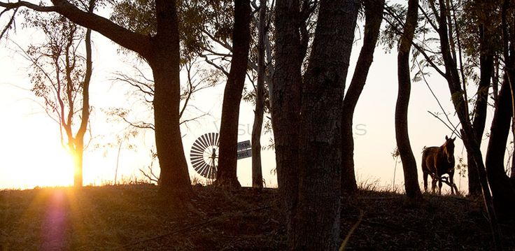The best Morning Glimpse Longreach Panorama! http://art-worx.com/catalog/product/view/id/63  #photographs #animalpresence