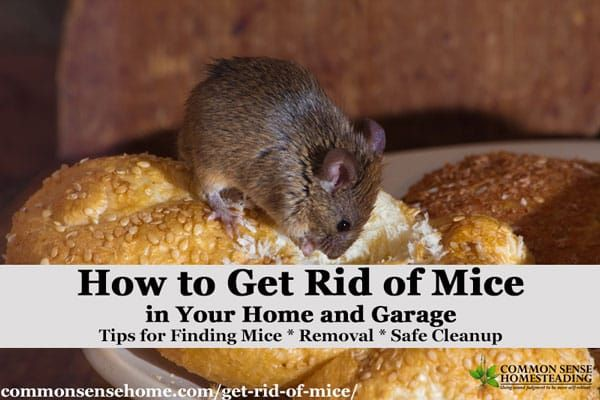 The Best Ways Get Rid Of Mice In Your House And Garage Getting