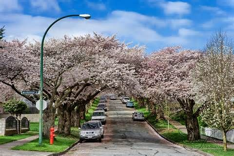 beautiful streets - - Yahoo Image Search Results