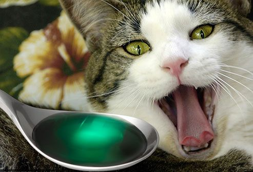 cats ear mites remedy