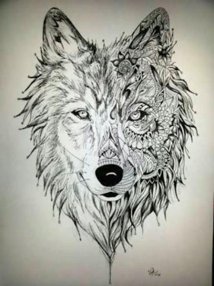 26 mejores imgenes de Lobo en Pinterest  Animales Animales