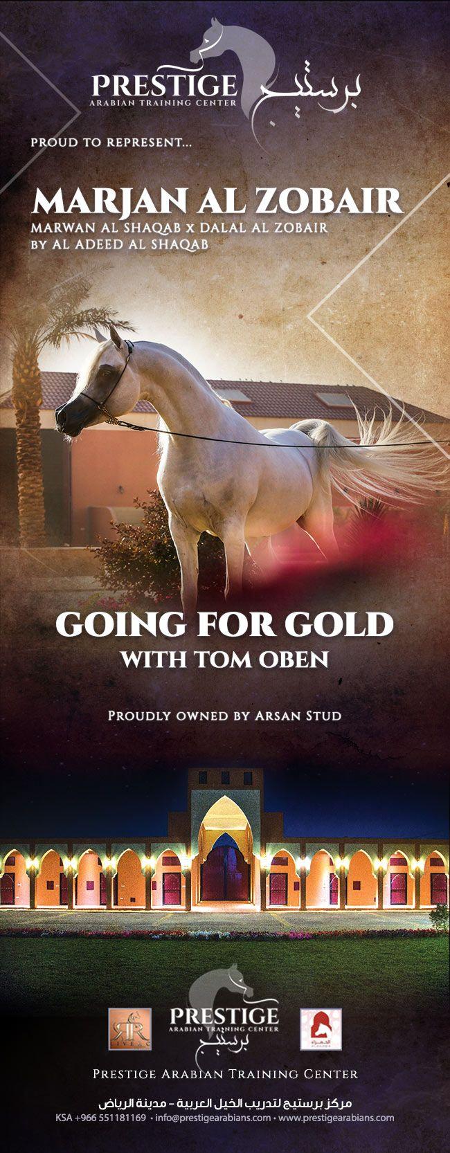 برستيج مرجان الزبير منافس الافحل في بطولة الشرقية Going For Gold Training Center Arabians