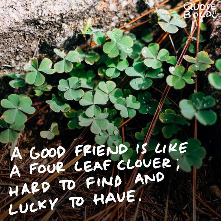 "best friend quotes - Irish Proverb ""A good friend is like a four-leaf clover; hard to find and lucky to have."""