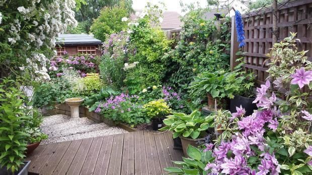 Making the most of a narrow garden with vibrant shrubs and flowering perennials, Somerset, May '15