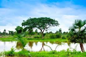 Resultado de imagen para paisaje llanero colombiano