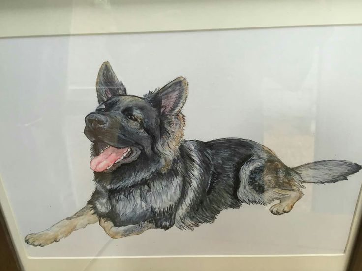 "Drawing of ""Dax"" the trainee police dog"