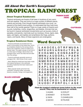 Worksheets: Tropical Rainforest