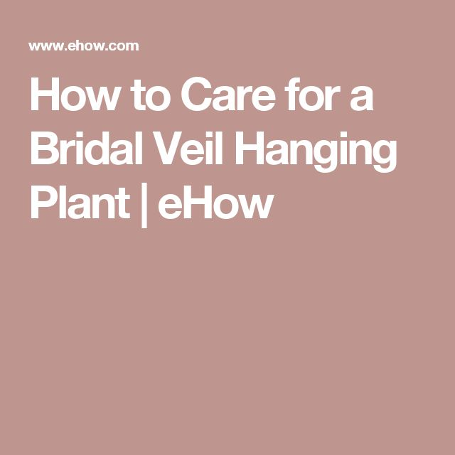How to Care for a Bridal Veil Hanging Plant | eHow