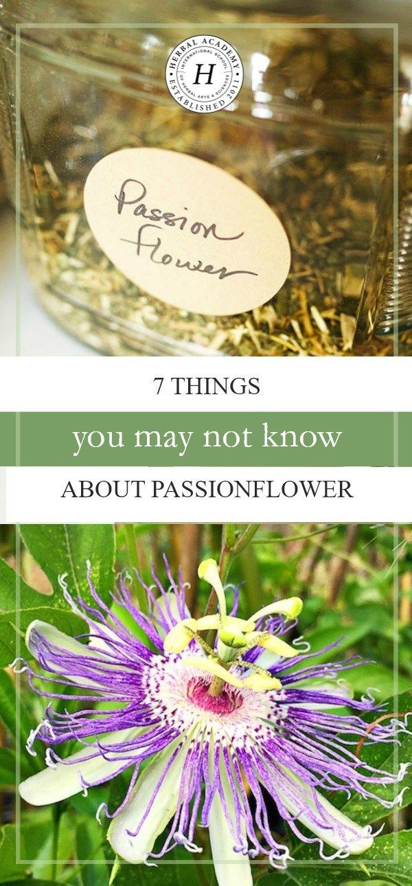 7 Things You May Not Know About Passionflower Passion Flower Passion Flower Benefits Herbalism