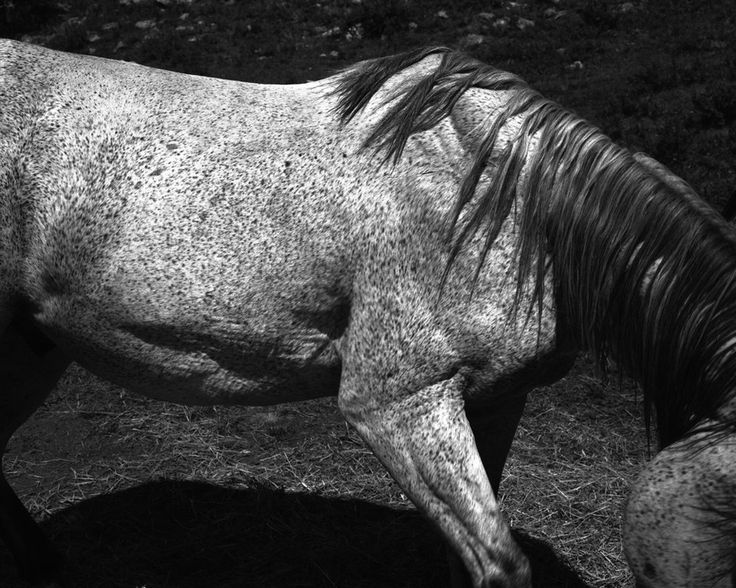 <em>Untitled (Horse)</em>, 2012