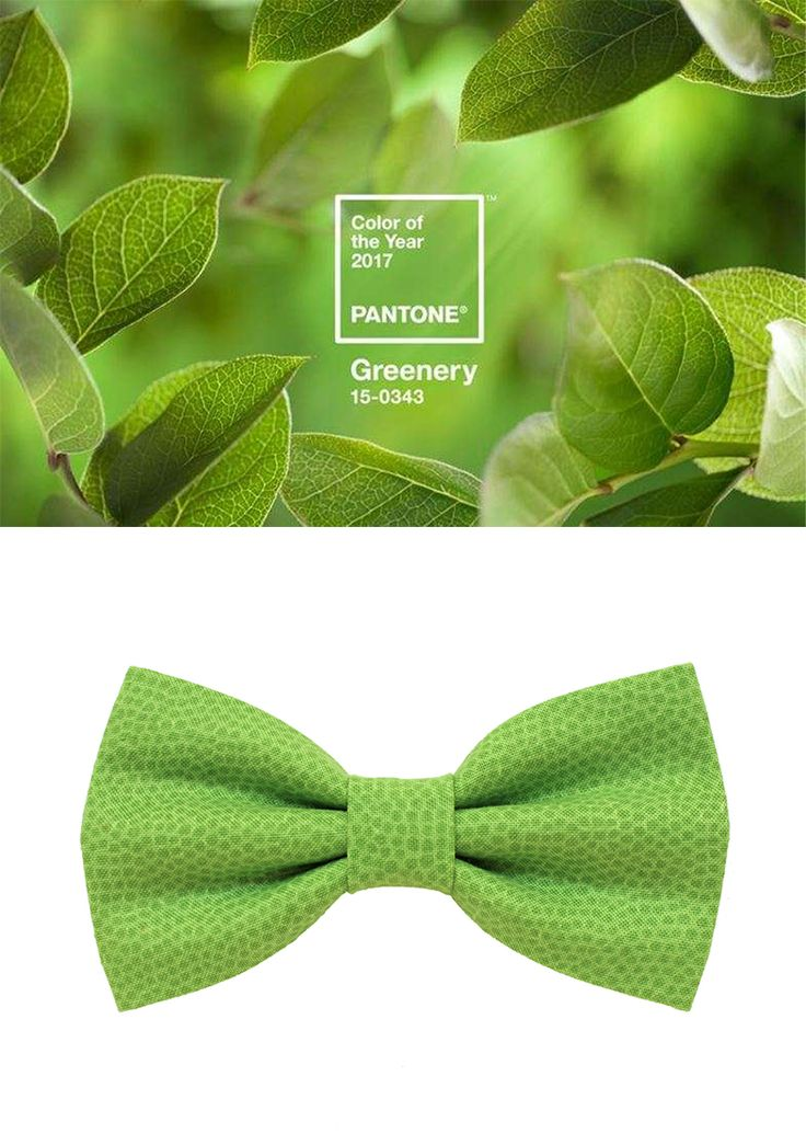 Pantone Unveils Color of the Year 2017: PANTONE 15-0343 Greenery. A refreshing and revitalizing shade, Greenery is symbolic of new beginnings. Greenery bow tie for men,Color of the Year 2017 Pantone, Scocca Papillon.  @scoccapapillon @etsy #pantone #greenery #pantone2017 #coloroftheyear #coloroftheyear2017 #bowtie #green #etsy #scoccapapillon