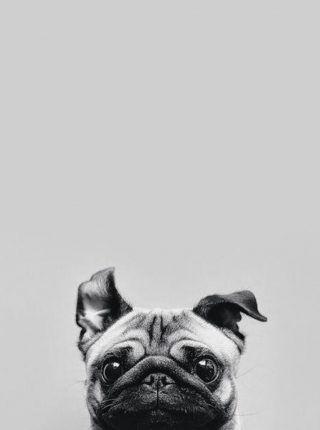 perro asustado gris