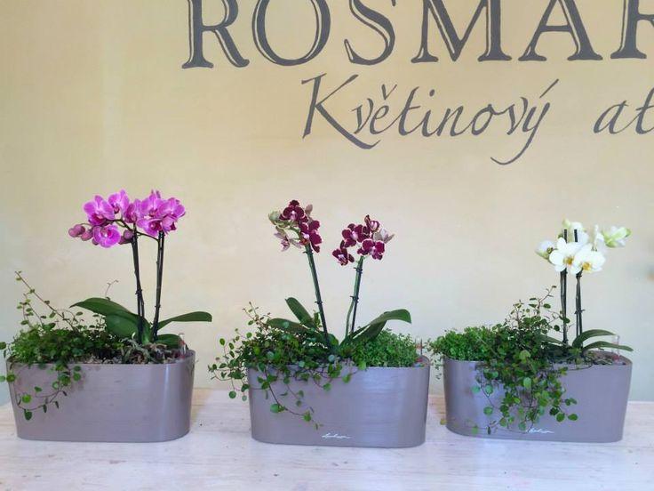Indoor plants design by ROSMARINO