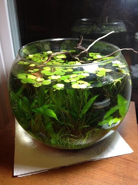 Les 415 meilleures images du tableau aquascaping sur for Mini poisson aquarium