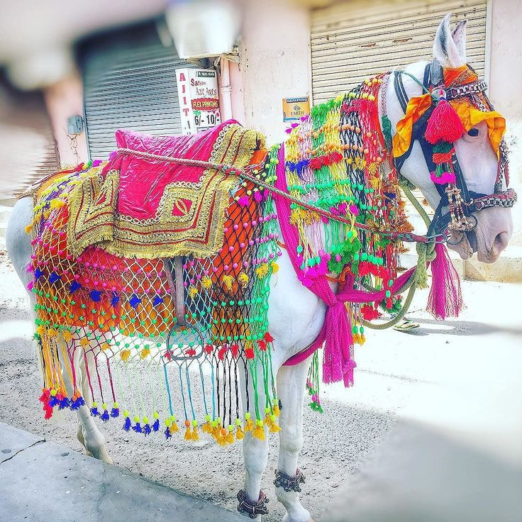 Its marriages season already. . Marriages in india, especially in North India / Punjab are really colourful. . A decorated mare for marriage